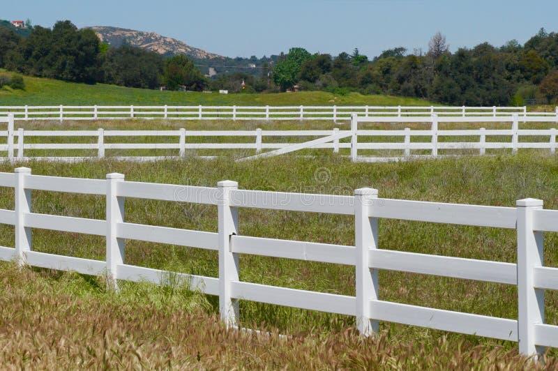 Rader av vita staket och att beta royaltyfria foton