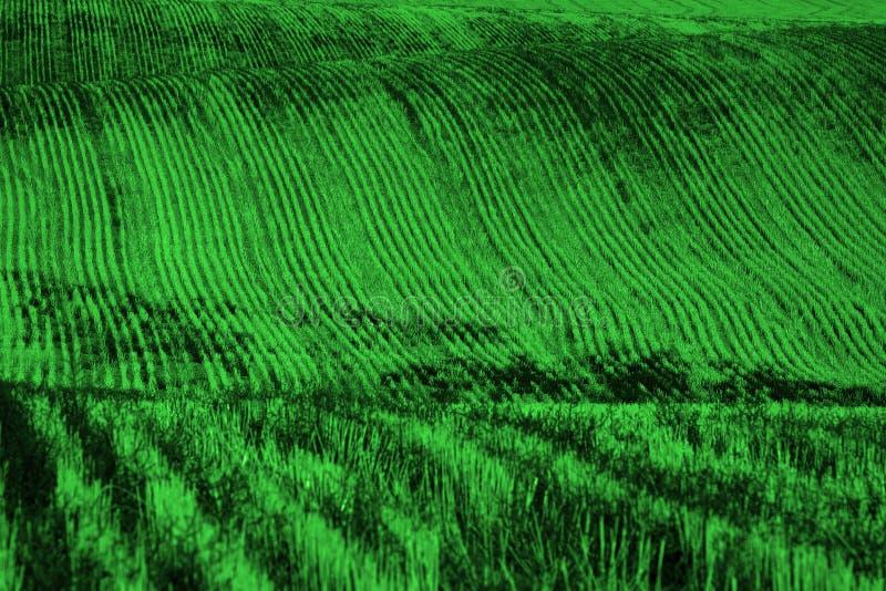 Rader och fåror på det plöjde fältet för att bruka jordbruks- pikstav arkivbilder