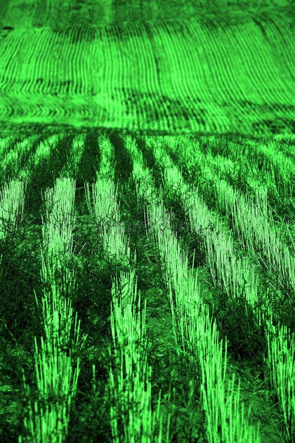 Rader och fåror på det plöjde fältet för att bruka jordbruks- pikstav royaltyfria foton