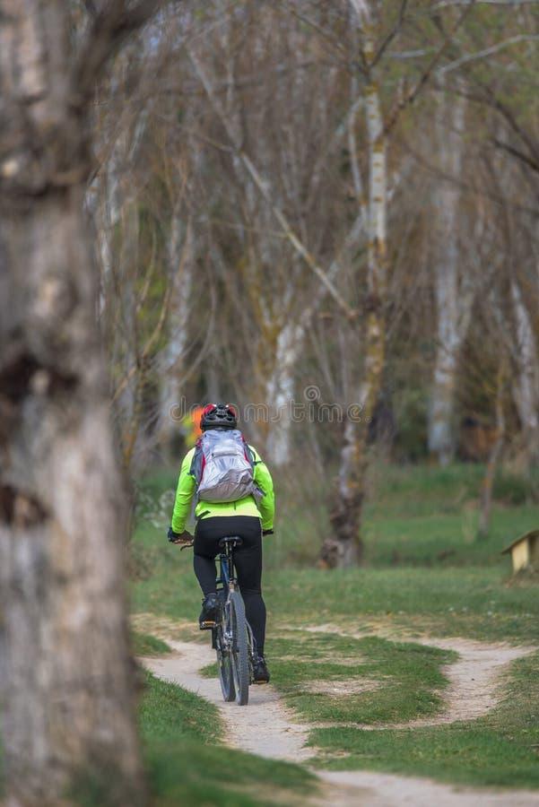 Radfahren in den Wald lizenzfreies stockfoto