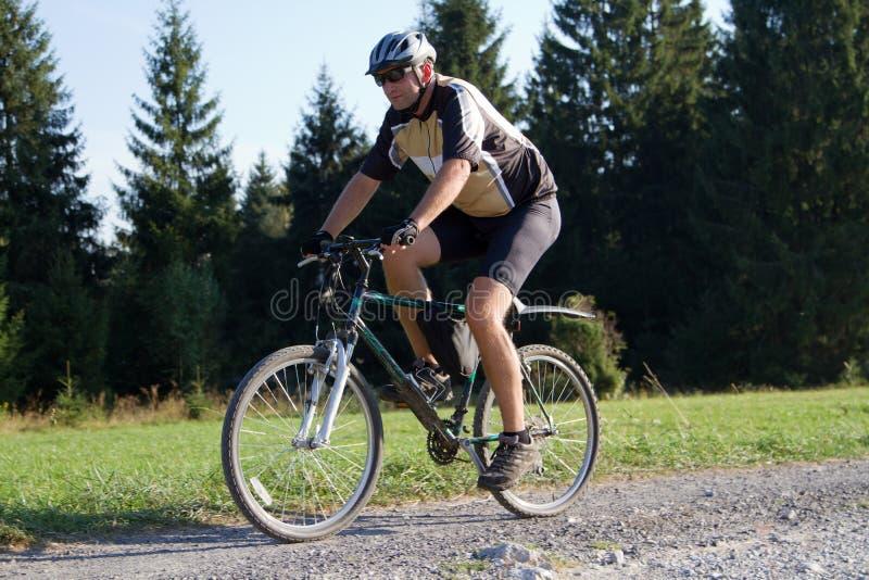 Radfahrer auf Waldspur lizenzfreie stockfotos