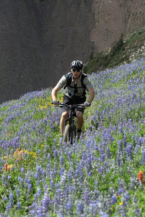Radfahrer in blühender Wiese lizenzfreies stockbild