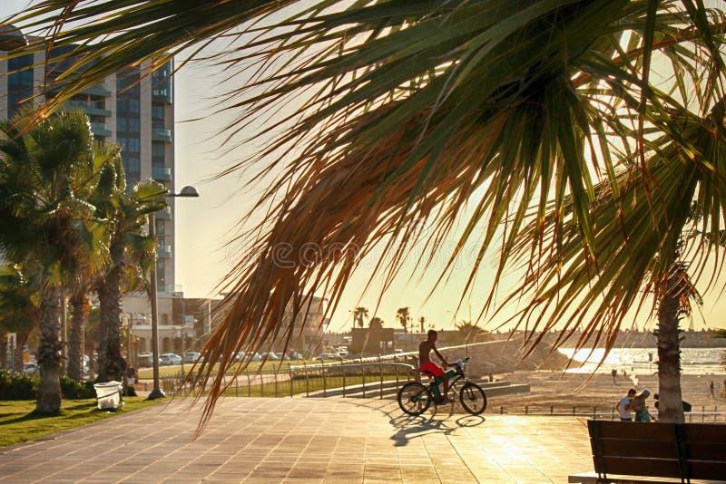 Radfahrerschattenbildreiten entlang Strand bei Sonnenuntergang stockbild