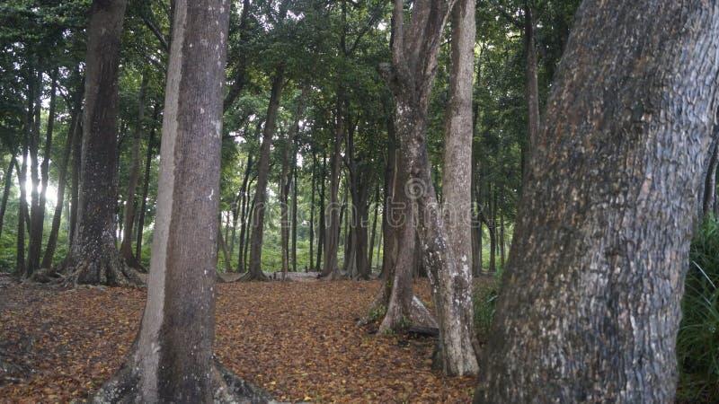 Radhanagar海滩森林 库存照片