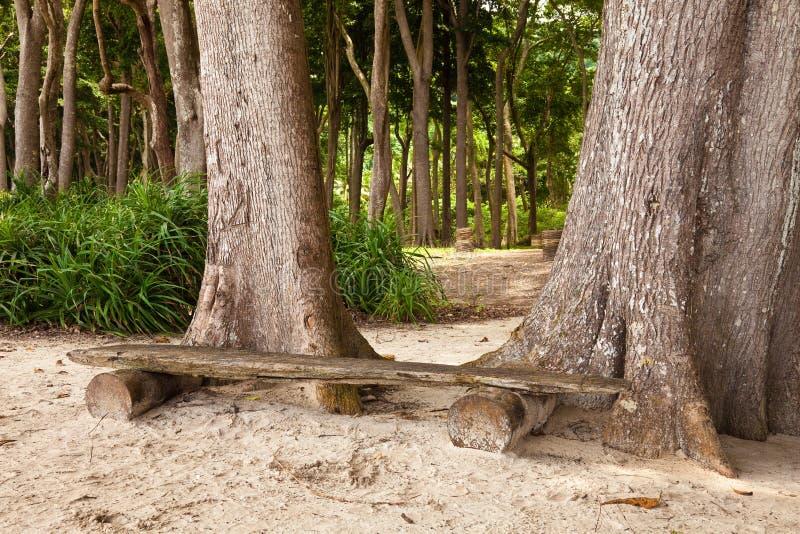radhanagar海滩的长凳 免版税库存照片