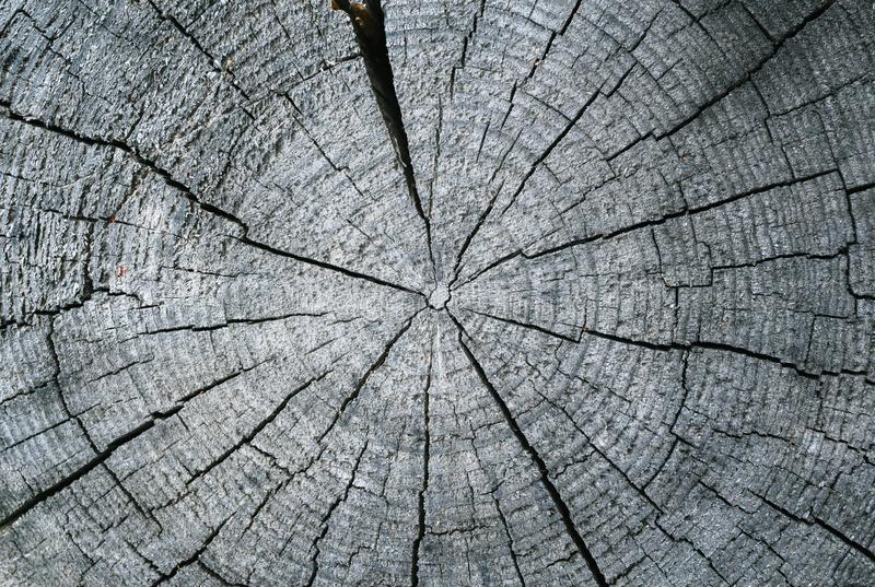 Radial cut of an old dry log. Radial cut of an old dry grey log with annual rings closup. Wood texture stock photos