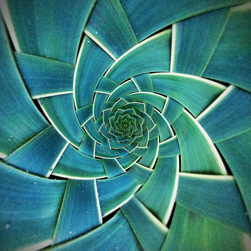 Radial Green Leaf Pattern texture royalty free stock photography