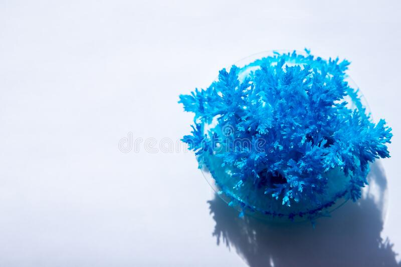 Radiant crystals grown at home. Chemical experience for children.Cultivation of radiant crystals. Synthetic crystal.diy. Radiant crystals grown at home. Chemical stock photography