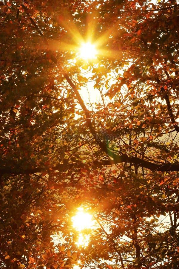 Radiant double sun shines through autumnal foliage royalty free stock photo