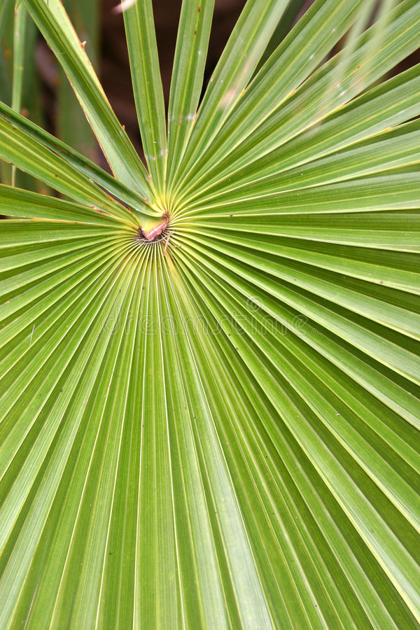 Radiating leaf royalty free stock photography