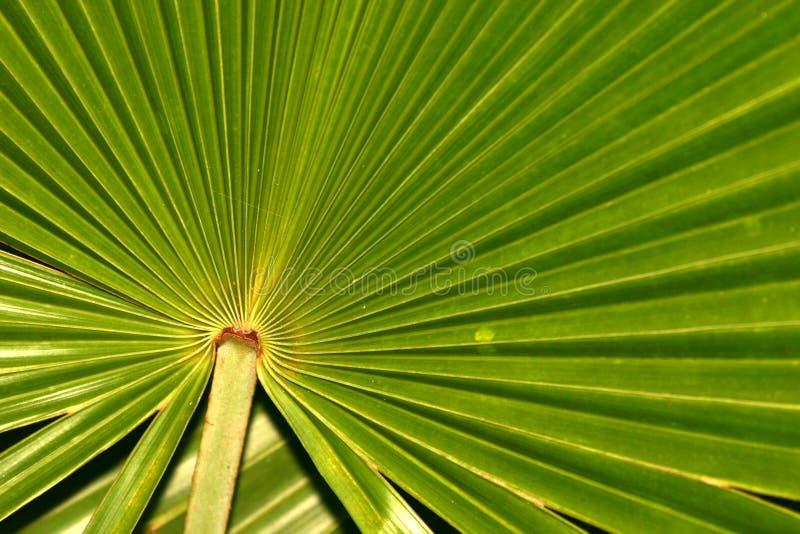 Radiating leaf stock image