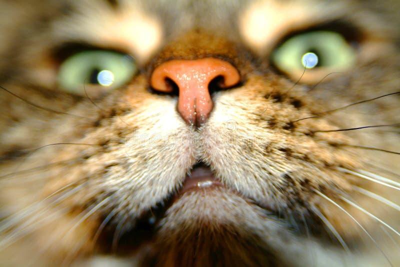 Radiatore anteriore del gatto fotografia stock