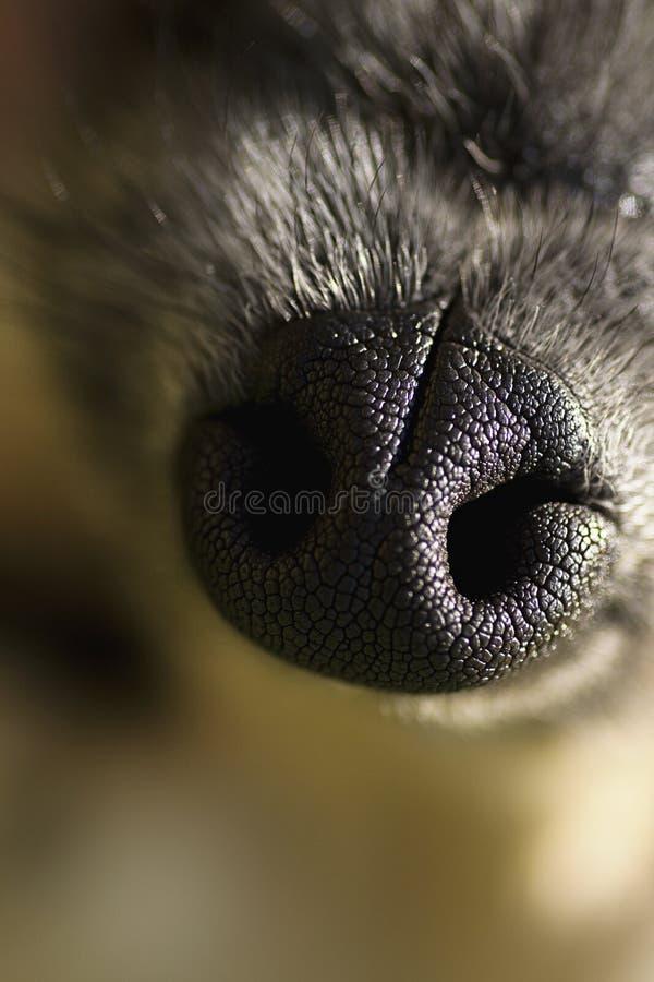 Radiatore anteriore di cani immagine stock