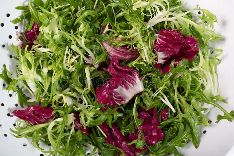 Radicchio, endive, roquette, Italian Salad wash off royalty free stock photo