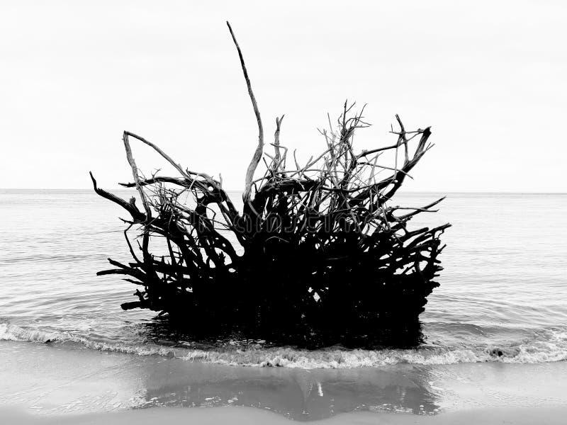 Radice del legname galleggiante fotografia stock