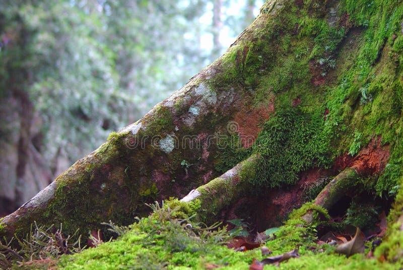 Radice dell'albero immagini stock