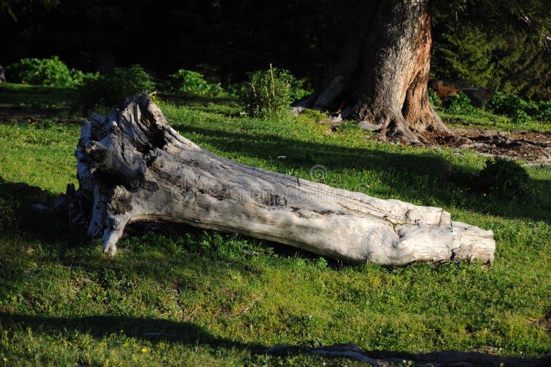 Radice morta dell'albero fotografie stock libere da diritti