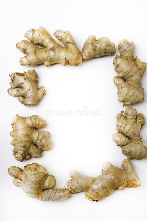 Radice o rizoma fresca dello zenzero isolata su bianco immagine stock