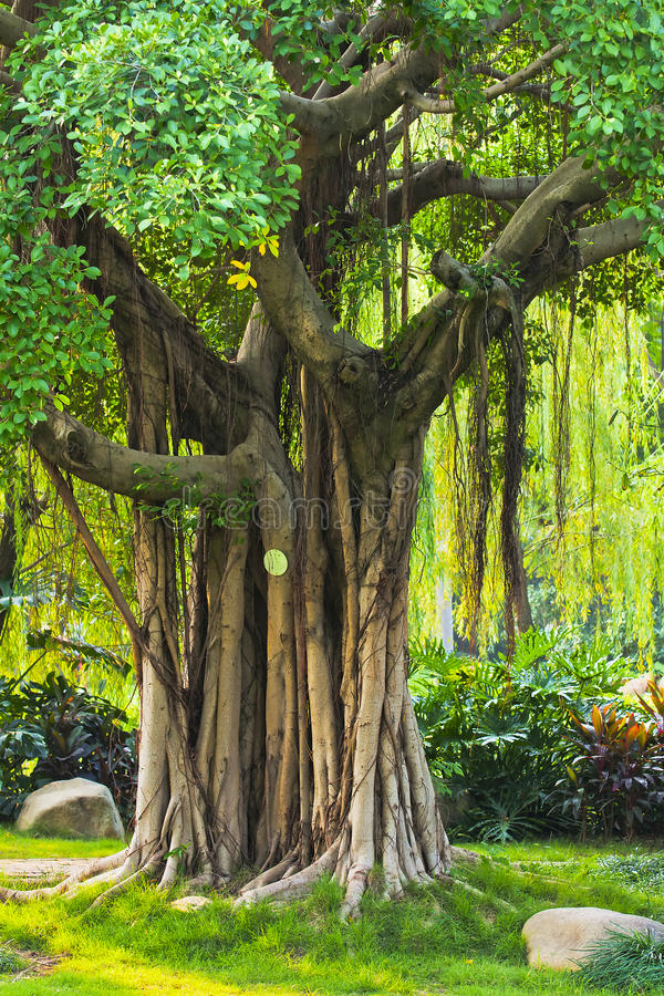 Radici dell'albero fotografia stock