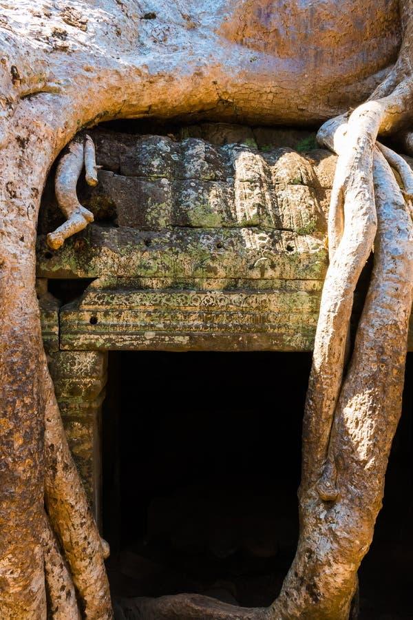 Radici dell'albero gigante sul vecchio tempio atient di Phrom di tum, Angkor Wat, Cambogia fotografie stock