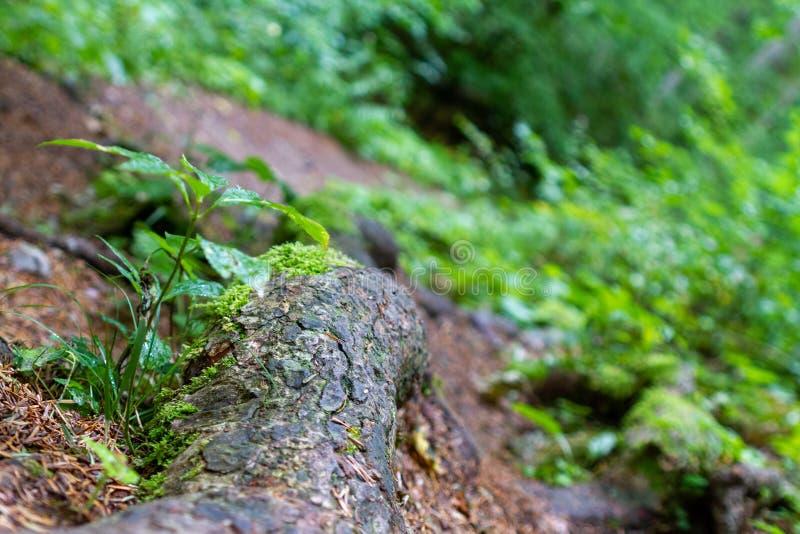 Radici di legno antiche a terra fotografia stock