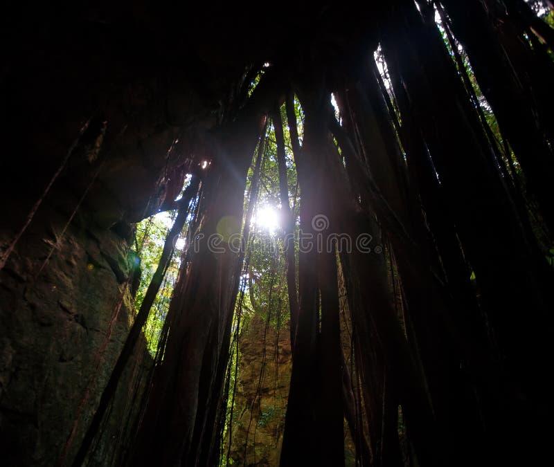 Radici e luce solare lunghe fotografie stock