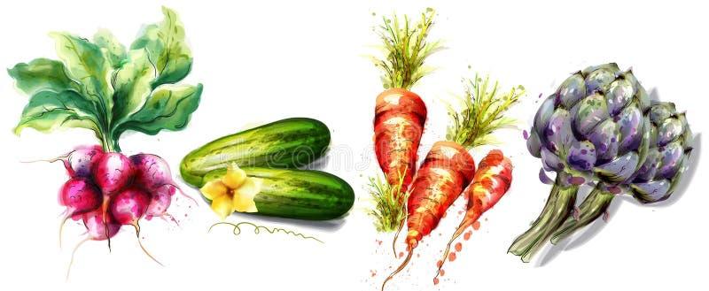Radijs, komkommer, wortelen en van artisjokgroenten Vectordiewaterverf op wit wordt geïsoleerd stock illustratie