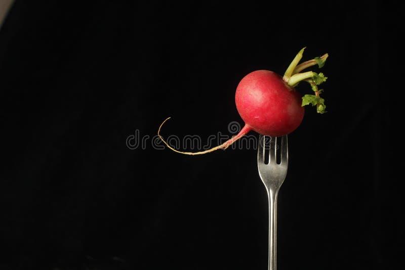 Radijs op een vork stock foto's