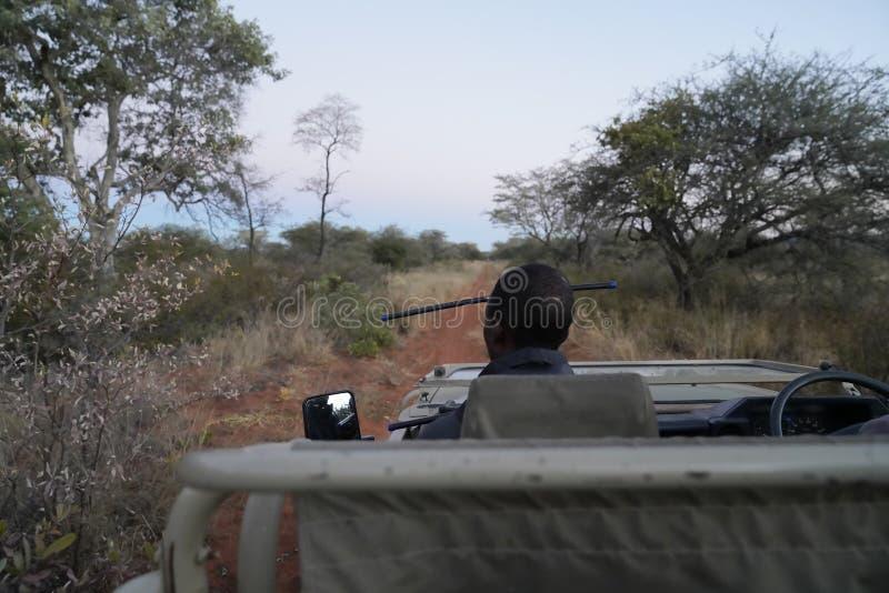 Radio-seguimiento de leopardos del camión del safari en bushveld denso en la reserva de naturaleza de Okonjima, Namibia fotos de archivo libres de regalías