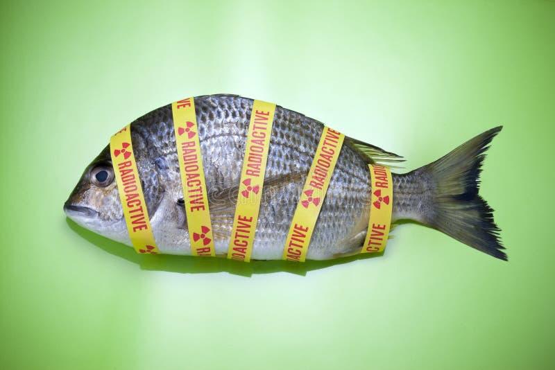 Radioaktiv havfiskmat royaltyfri fotografi