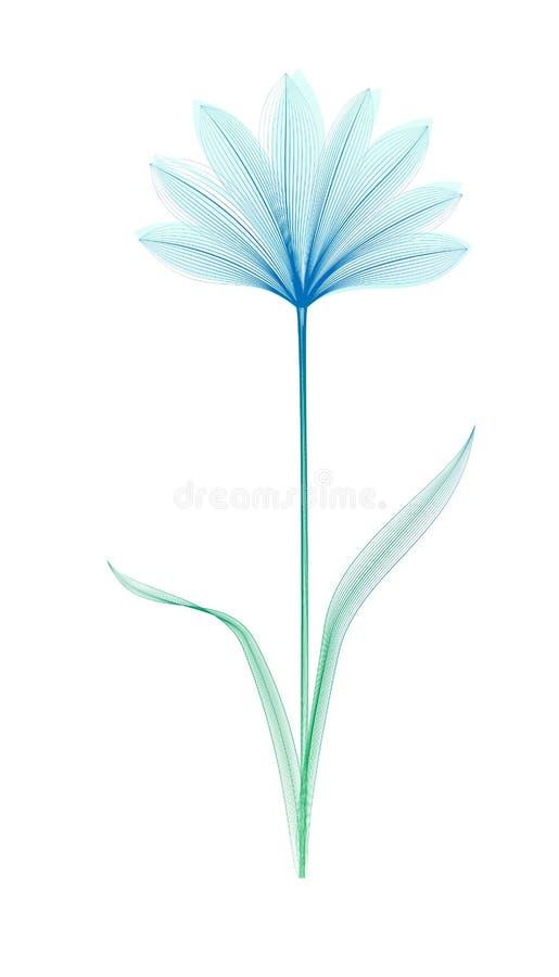 Radiografía de la flor o efecto de la mezcla Fondo del diseño floral?, contexto, diseño de la ilustración Floración elegante stock de ilustración