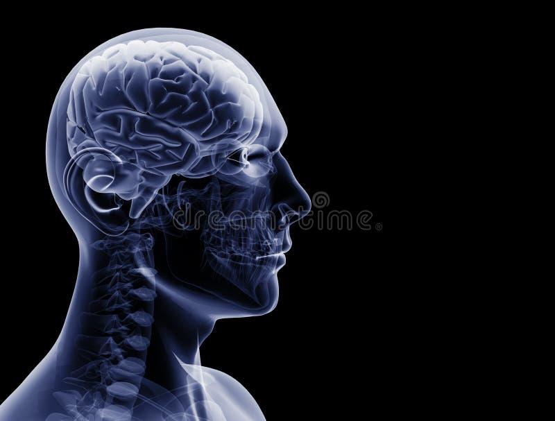 Radiografía del hombre ilustración del vector