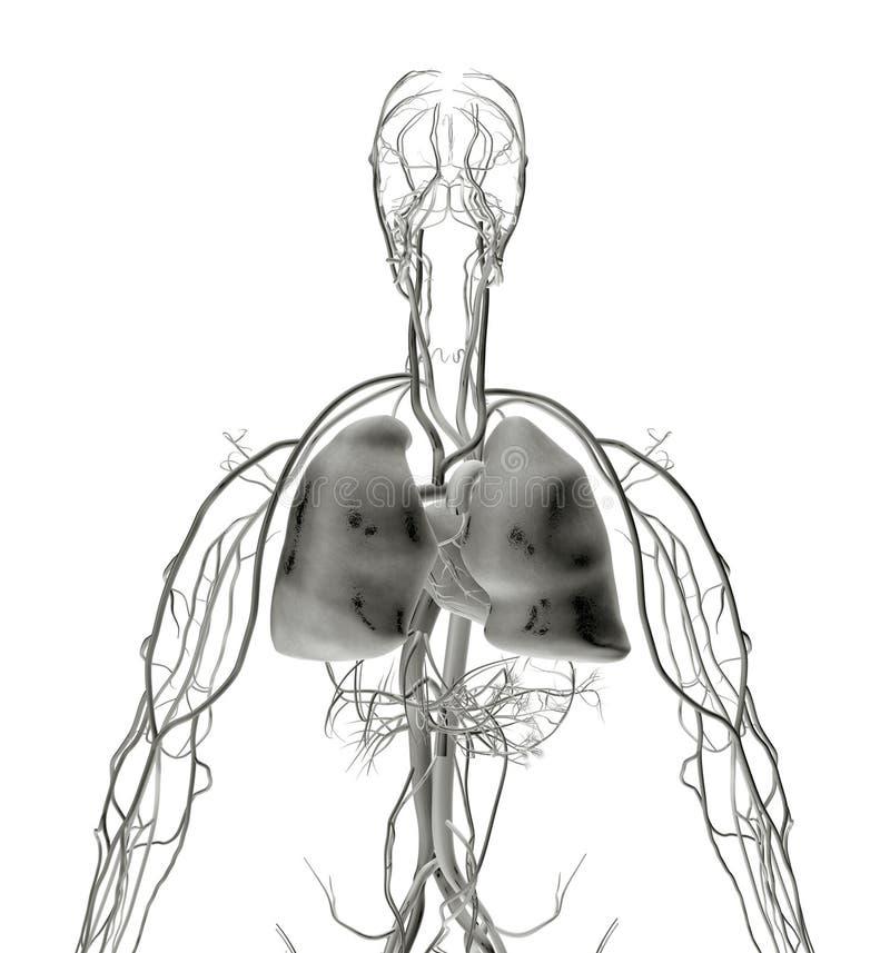 Radiografía del pulmón stock de ilustración