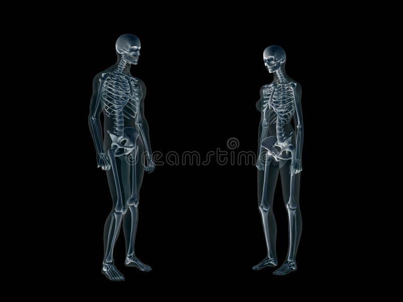 Radiografía, radiografía del cuerpo humano, hombre y mujer. stock de ilustración