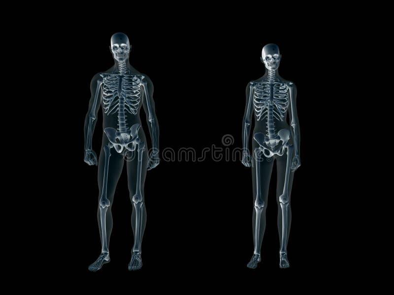 Radiografía, radiografía del hombre del cuerpo humano y mujer. ilustración del vector