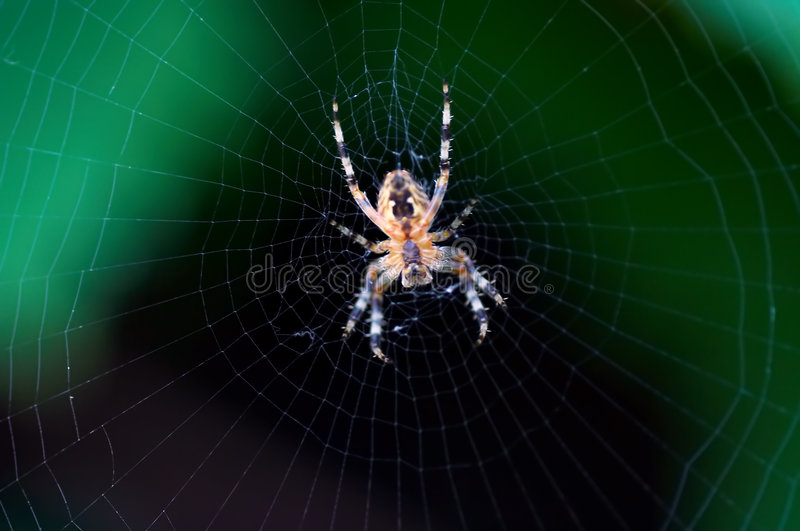 Radiographic of a spider stock photos