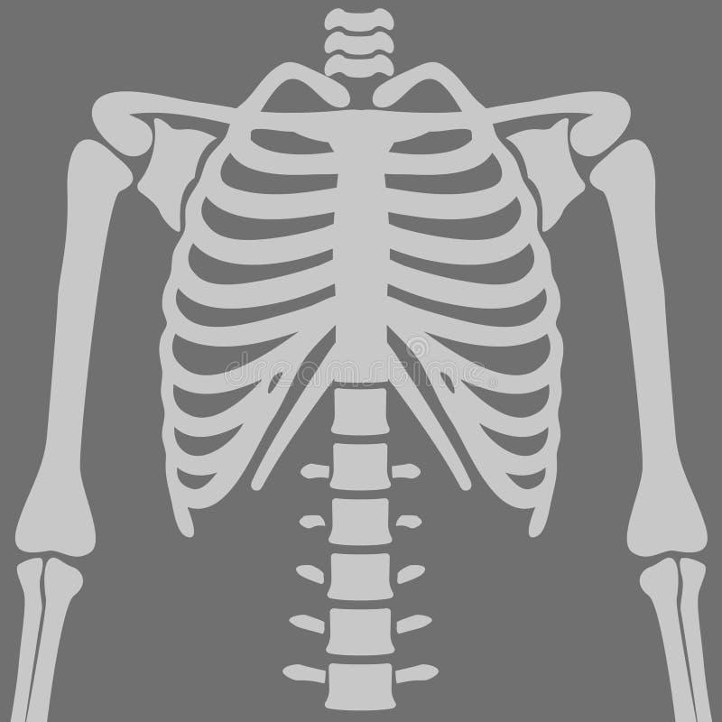 Radiographies de la poitrine d'illustration illustration libre de droits