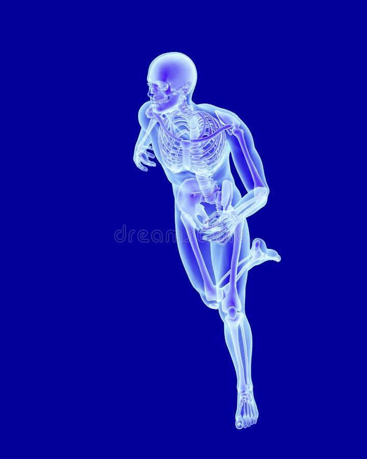 Radiologiczna obraz cyfrowy anatomia bieg mężczyzna ilustracja wektor