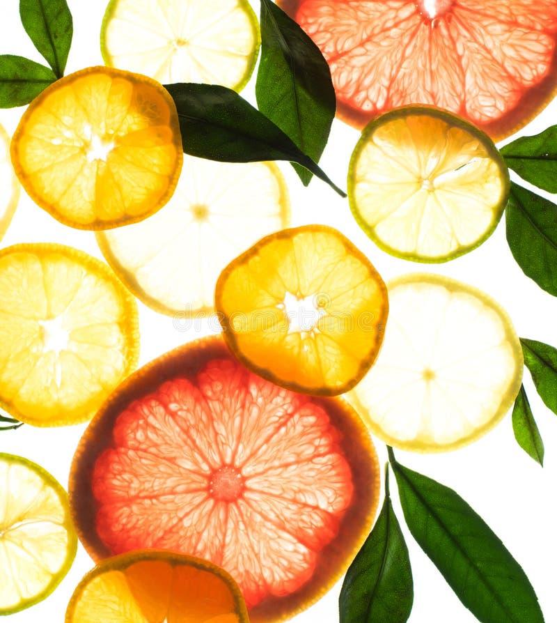 Radiologicznej cytrus owoc makro- odosobnionej pomarańczowej cytryny liścia grapefruitowy wzór zdjęcia stock
