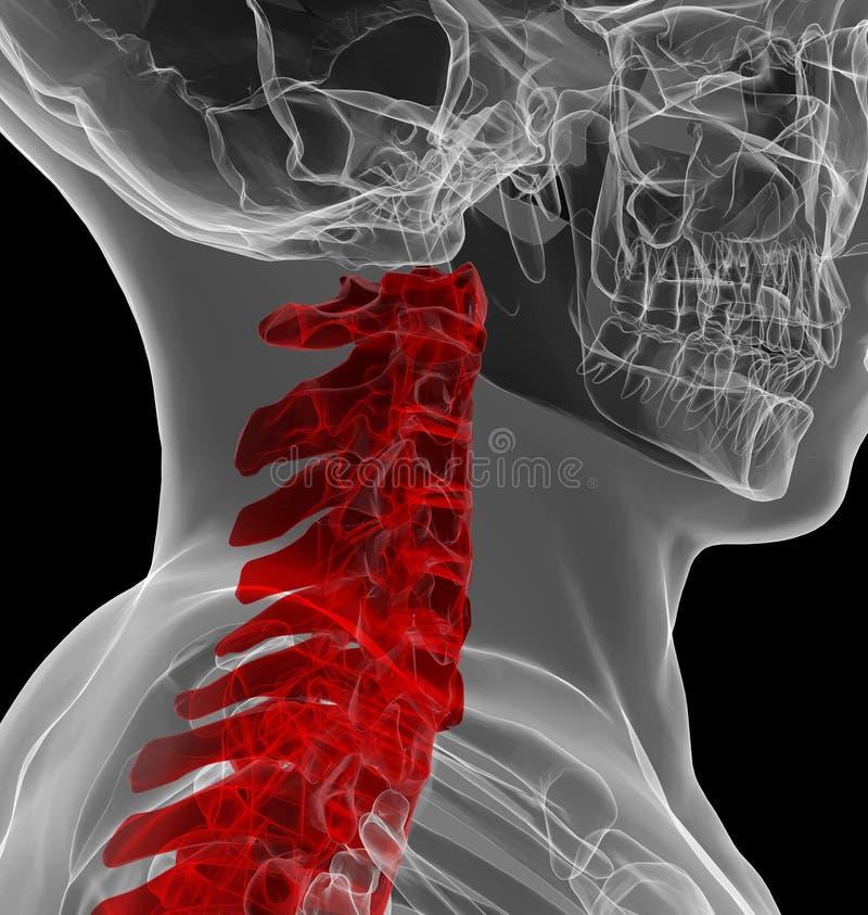 Radiologiczny widok ludzki karkowy kręgosłup ilustracja wektor