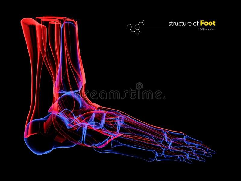 Radiologiczny wizerunek ludzka stopa, 3d ilustracja ilustracja wektor