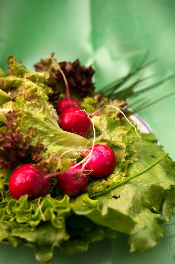 Radis et salade photo libre de droits
