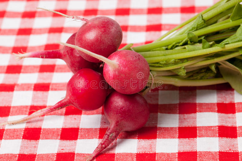 Radis frais photo stock