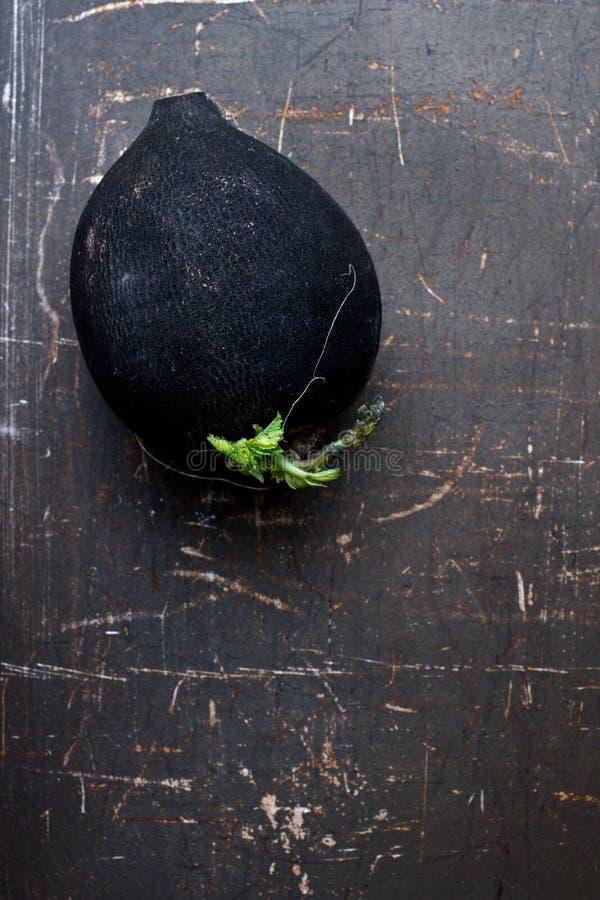 Radis noir images stock