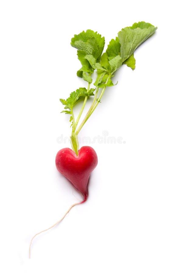 Radish as a heart royalty free stock photo