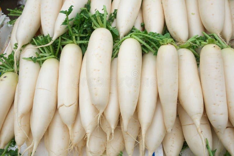 radish branco foto de stock