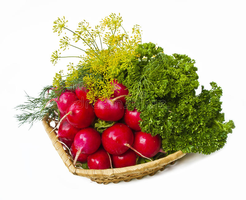 Radish and dill in bascet. Isolated over white stock photos