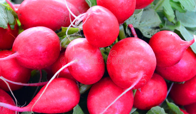 The radish. Is an edible root vegetable of the Brassicaceae family that was domesticated in Europe in pre-Roman times stock photos