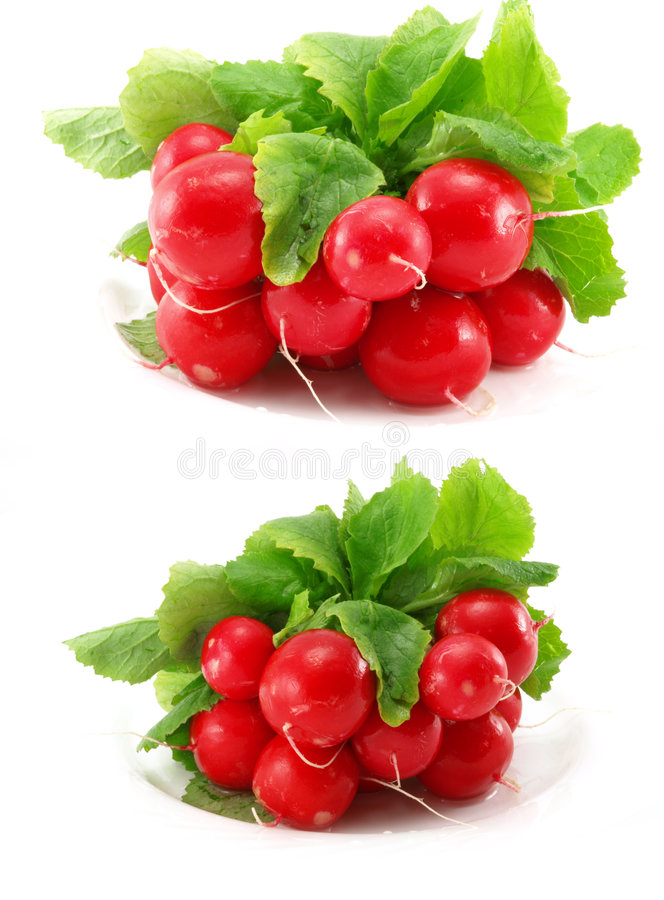 Radish - isolated. Two radish photos in one picture (on white background stock photos