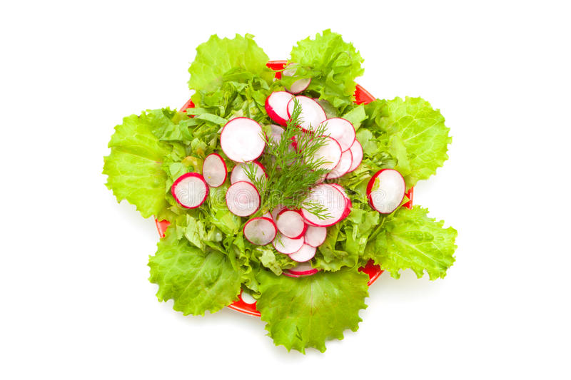 Download Radish And Lettuce Royalty Free Stock Image - Image: 19919326
